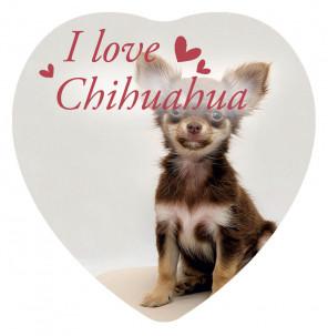Magnete Love Chihuahua